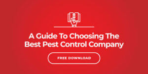 I Manage a Property - Do I Need Monthly Pest Control?