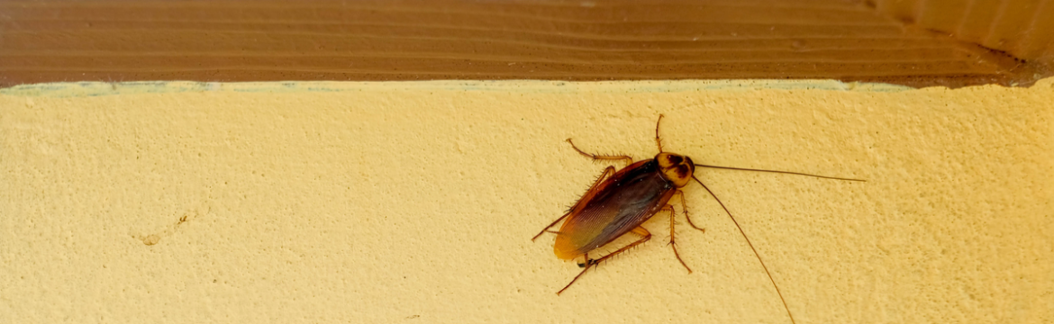 Should I Get Pest Control Services if I've Only Seen One Cockroach