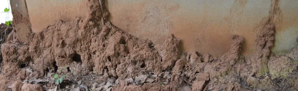 How to Spot Termite Damage